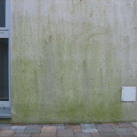 Grünbelag an Hauswand vorher